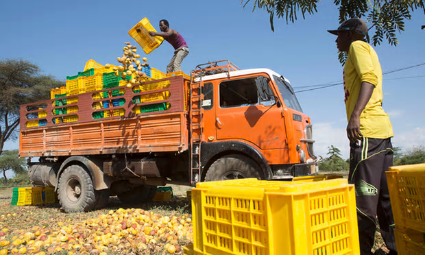 Damaged produce thrown out in Ethiopia