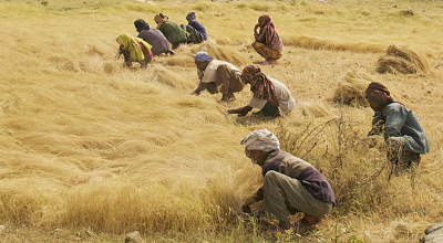 Ethiopia Loses $840M Due to Post Harvest Losses - Jimma