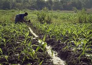 Ethiopia-Investment-in-agriculture-paying-off